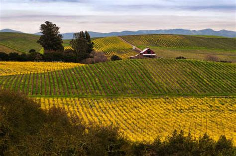 california wine country  foodies