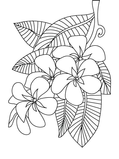 peony coloring page  getcoloringscom  printable colorings pages  print  color