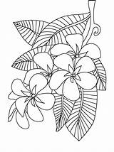 Coloring Flower Pages Peony Frangipani Plumeria Printable Floral Sheets Adults Colouring Patterns Adult Flowers Drawing Designs Getcolorings スケッチ Embroidery Getdrawings sketch template