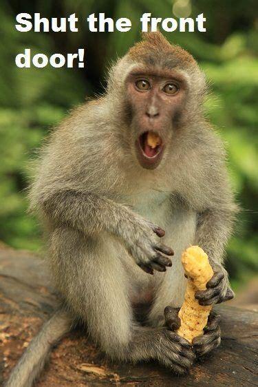 shut the front door shut the front door monkey meme funnies