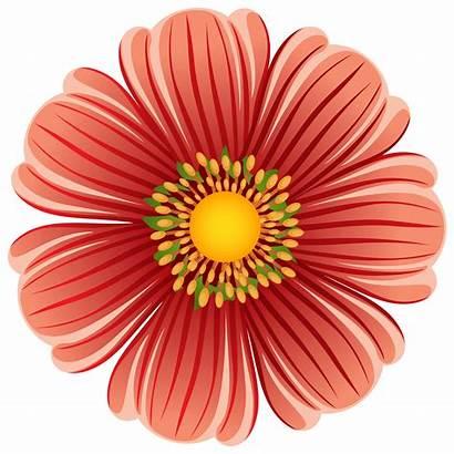 Flower Clip Transparent Clipart Flowers Orange Daisy