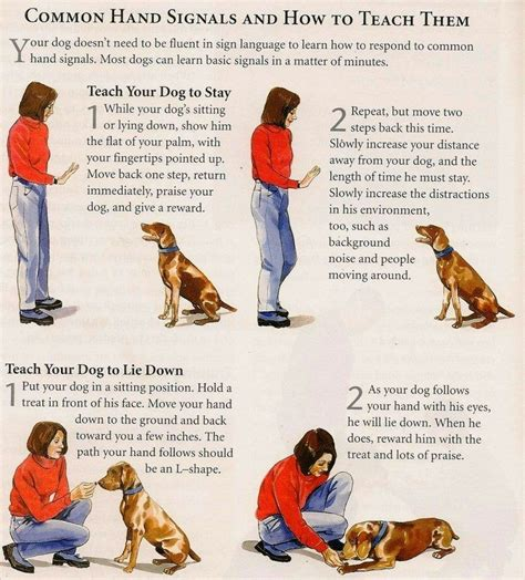 dog owners   dogs trained
