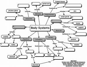 Body Systems Concept Map  For Students To Fill