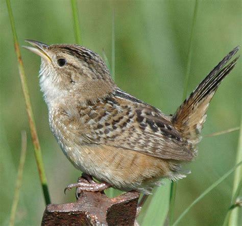stewardship birds of minnesota audubon minnesota