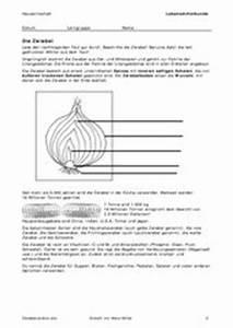 Aufbau Der Zwiebel : 4teachers lehrproben unterrichtsentw rfe und ~ Lizthompson.info Haus und Dekorationen