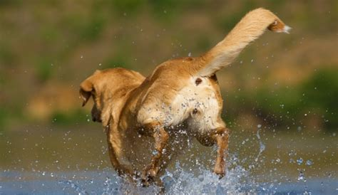 Your Dog Tail Injury (why This Is A Serious Issue