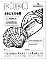 Seashells Mauioceancenter sketch template