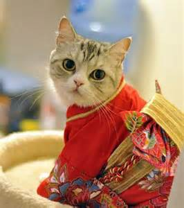 japanese cats cats wearing kimonos is a thing in japan