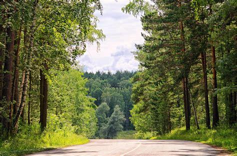 picture wood tree nature road leaf landscape