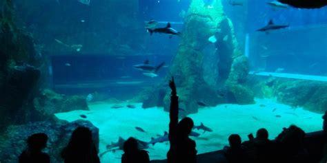animations aquarium de biarritz