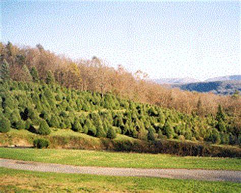 christmas tree farms pennsylvania northeastern pennsylvania christmas tree farms choose and 5061