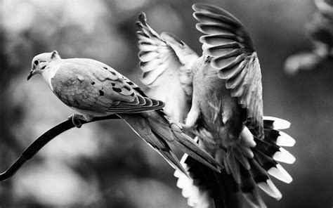 Animal Wallpaper Black And White - black and white nature birds animals grayscale 1920x1200