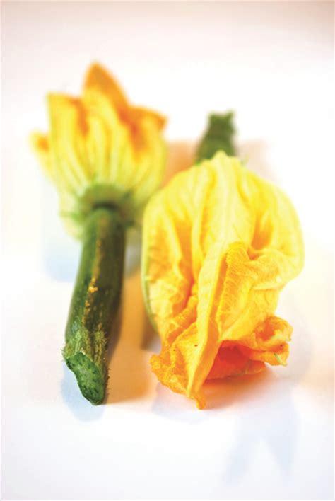 cuisiner fleurs de courgettes cuisiner les fleurs de courgette satoriz le bio pour tous