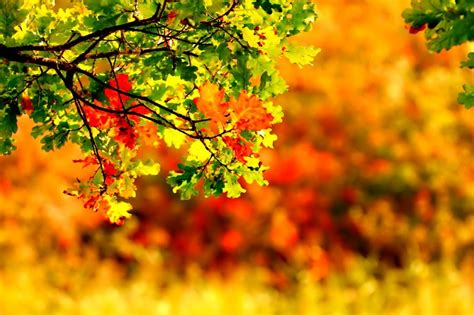 September Wallpapers High Quality | Download Free