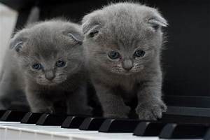 Cats La : piano free images on pixabay ~ Orissabook.com Haus und Dekorationen