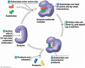 Enzymes - True Safe Cleaning In Action