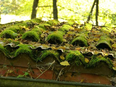 mousse sur toiture tuiles comment nettoyer sa toiture