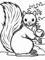 Squirrel Coloring Pages Eating Printable Hungry Squirrels Acorn Colorings Getdrawings Getcolorings Colornimbus sketch template