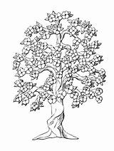 Coloring Tree Pages Peach Oak Drawing Flower Inchworm Trees Flowers Drawings Colouring Complicated Symmetry Monochrome Complex Printable Getcolorings Leaves Getdrawings sketch template