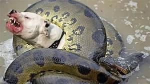Dog vs big snake - Amazin fight to death - Wild animals ...