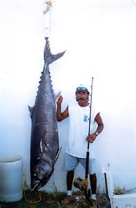 Big Fishes of the World