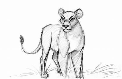 Lion King Nala Concept Character Disney Drawings