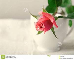 Blumen Im November : rosa rosen blumen auf wei em hintergrund karte f r ~ Lizthompson.info Haus und Dekorationen