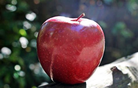 Free picture: fruit, food, red apple, daylight, sunshine ...