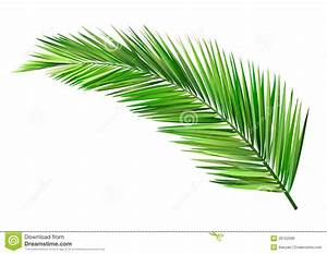 Coconut leaf stock vector. Illustration of plant, vector ...