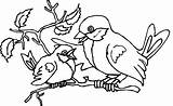 Robin Coloring Pages Baby sketch template