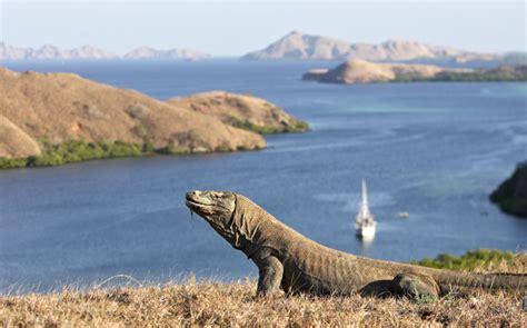komodo tourism  fine balance australian geographic