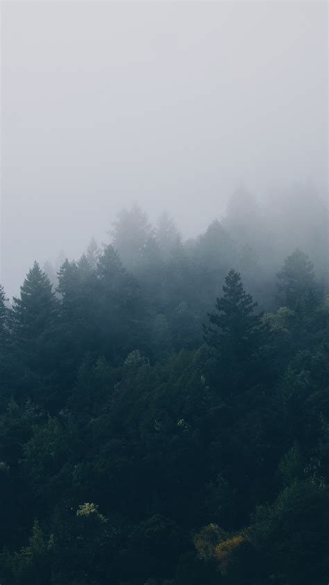 forest iphone wallpaper gallery