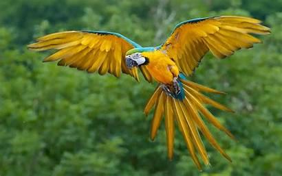 Macaw Bird Wallpapers Backgrounds Birds Parrot Background