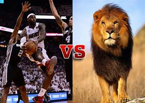 Image Gallery ostrich vs lion
