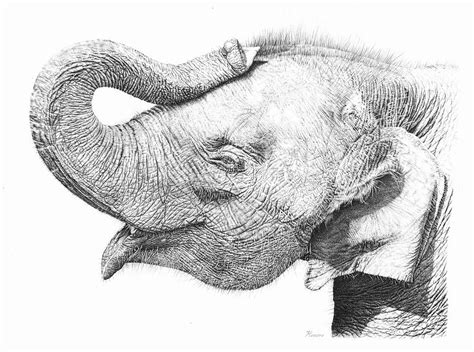 baby elephant drawing  remrov