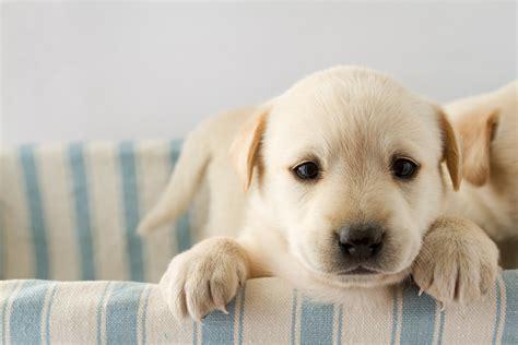 Guida Ai Cuccioli Di Cane X Salvis Juribus