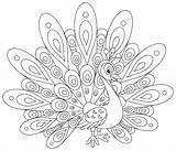 Coloring Pages Peacocks Adult Simple Printable Children Justcolor sketch template