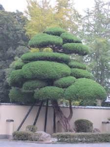 Japanese Cloud Tree