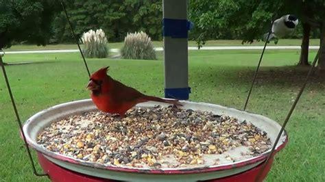 pwalpar vlog satellite dish bird feeder part one 1 14 2016