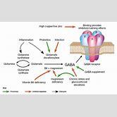glutamic-acid-decarboxylase-antibody