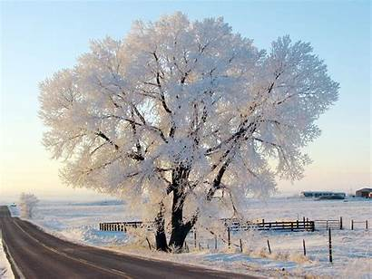 Snow Winter Backgrounds Screensavers Frost Wallpapers Tree