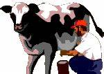 Cow and Bull Animated Graphics - Animate It!