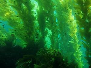 Southern California Bight Regional Aerial Kelp Surveys