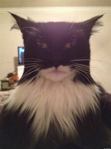 This Cat Looks Like Batman Photo Huffpost