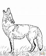 Coyote Coloring Howling Printable Drawing Clip Supercoloring Tattoo sketch template