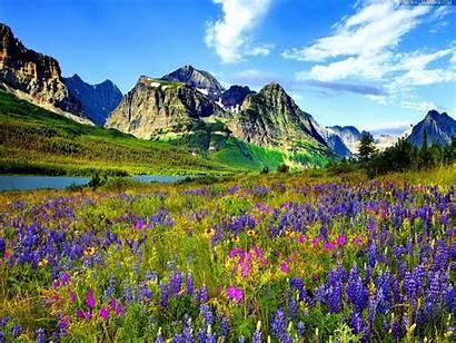Mountain Flowers Colorado Flower Meadow Purple Mountains