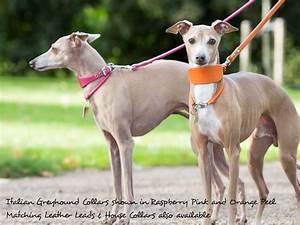 Leather Italian Greyhound Collars — Charley Chau - Luxury ...