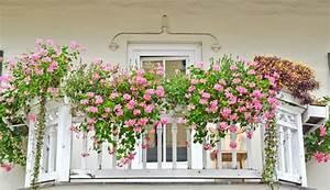 Balkonkästen Bepflanzen Beispiele : balkonk sten bepflanzen beispiele balkonk sten gestalten ~ Lizthompson.info Haus und Dekorationen