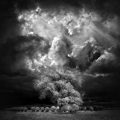 Home Tree  Infrared By Michilauke On Deviantart