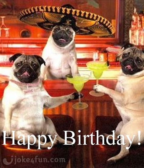 Happy Birthday Pug Meme - joke4fun memes pugs and kisses on yout birthday